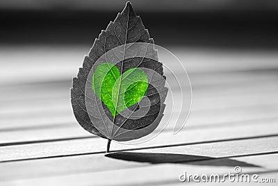 Verde en forma de corazón en la hoja