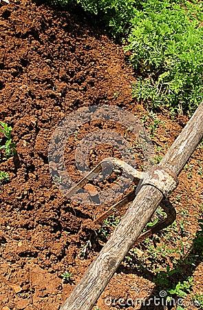Verdes y herramienta 4 del jardín