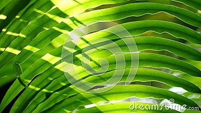 Verduras tropicais deixam a ásia tailândia video estoque