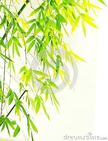 Verdure flourish bamboo foliage