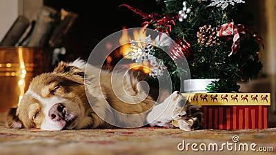 Verfolgen Sie das Nickerchen machen nahe einem Weihnachtsbaum mit einem Geschenk brennender Kamin im Hintergrund Konzept: Wärme u