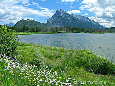 Vermilion Lakes with daisies