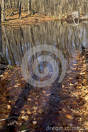 Free Vernal Pool With Tree And Sky Reflections, Springtime, Connecticut. Royalty Free Stock Photography - 64593427