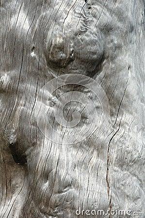 Vernietigde boom - achtergrond