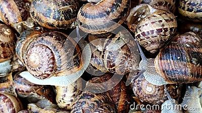 Vers levende slakken op een markt, bazaar Veel verse levende slakken stock footage