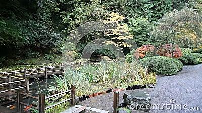 Verschieben-Film der hölzernen Gehweg-Brücke über Koi Fish Pond mit Laubbäumen und Immergrün in japanischem Garten Portlands im H stock video