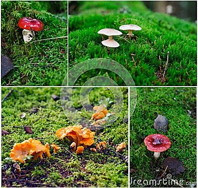 Verschiedene Pilze von Finnland