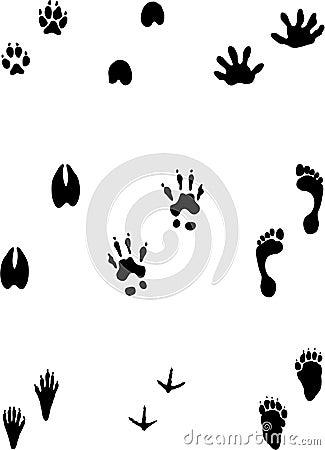 verschiedene spuren lizenzfreie stockbilder bild 2156609. Black Bedroom Furniture Sets. Home Design Ideas