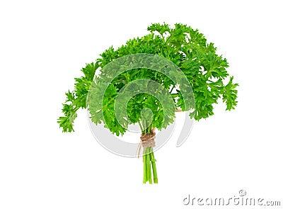 Verse groene peterselie