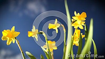 Verse kleefbloemen in de tuin - versheid van de lente in HD-kwaliteit stock footage