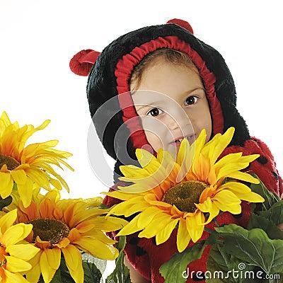 Verstecken unter den Sonnenblumen