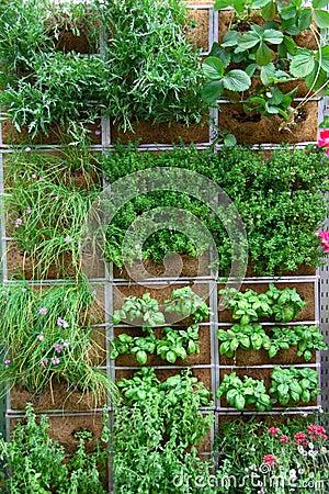 Free Vertical Garden Stock Photos - 9555473