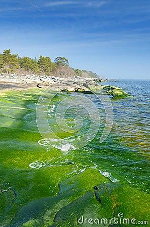Vertical landscape of green coast