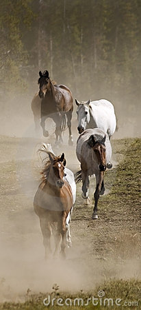 Vertical Line of Horses and Dust
