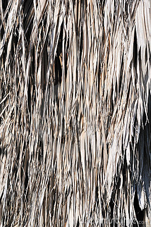 Vertical palm thatch backgrouind