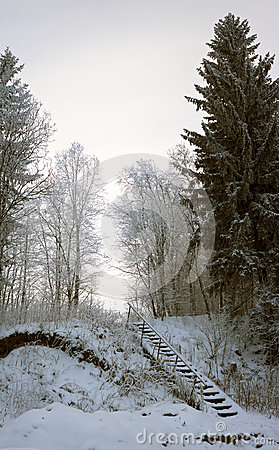 Free Vertical Panorama Of Old Ladder In Snowy Forest Stock Photography - 50099192