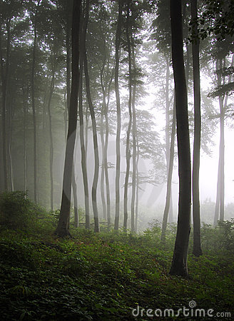 Vertical photo of a green forest with fog
