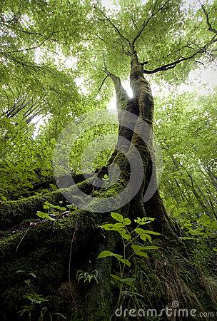 Vertical photo of a tree with green moss in a green forest in summer