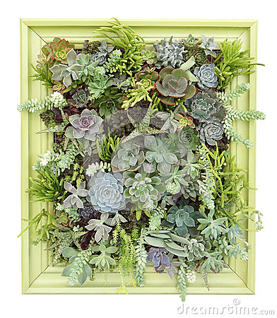 Free Vertical Succulent Wall Art Royalty Free Stock Photos - 37865788