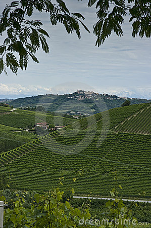 Vertical: Town & vineyards in Piedmont, Italy