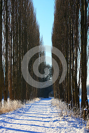 Vertical winter landscape
