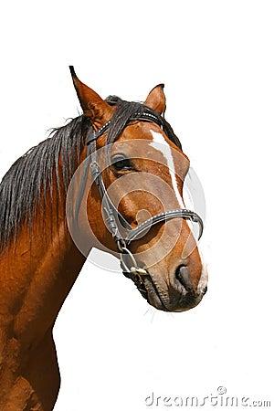 Verticale de cheval brun