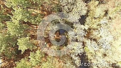 Verticale mening van een bos stock video