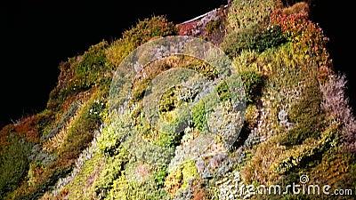 Vertikaler Garten auf der Fassade eines Gebäudes in der Nacht in Madrid Spanien bei Nachtaufnahmen 4k stock video footage