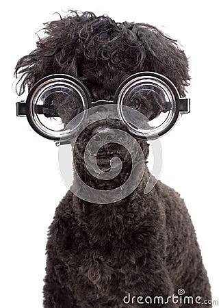 Very Brainy Dog