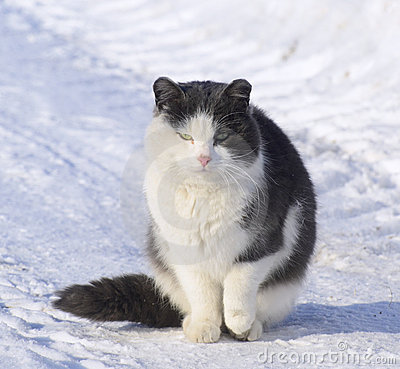 Very cold Cat