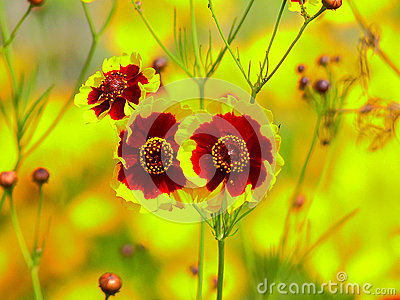 very nice flowers stock photo  image, Beautiful flower