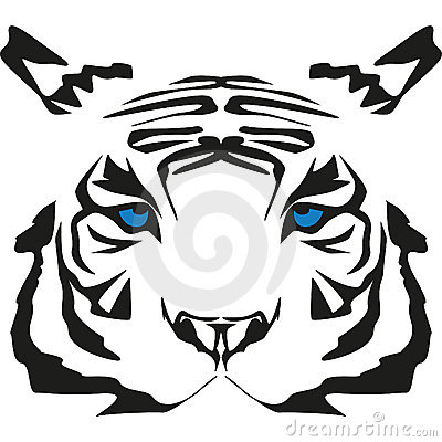 Very rare white tiger
