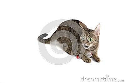 Very Surprised Cat