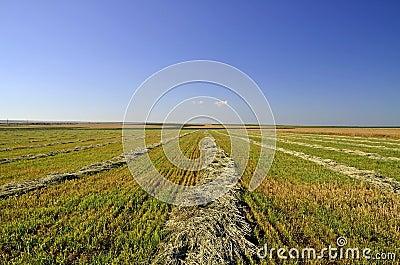 Verzamelde oogst in zwaden