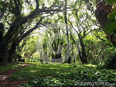 Verzauberter Wald
