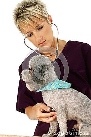 Free Vet And Dog Stock Photos - 835933