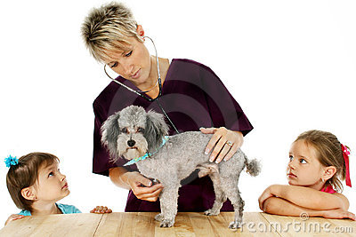 Vet, Dog And Children