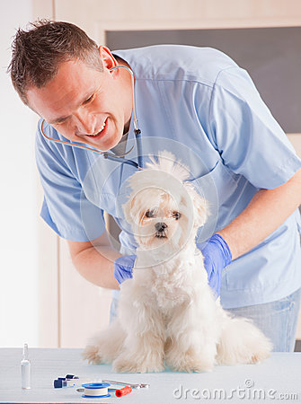 Vet and dog