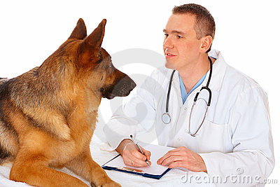 Vet examining dog