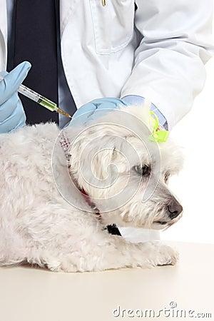 Vet giving dog needle injection