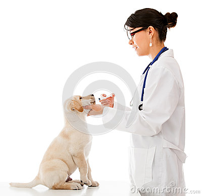 Vet giving medicine to a puppy