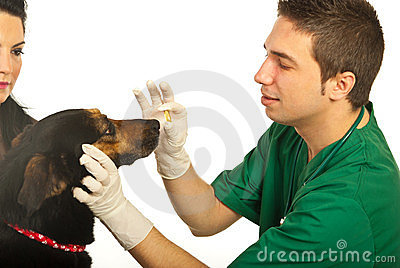 Vet giving pill to dog