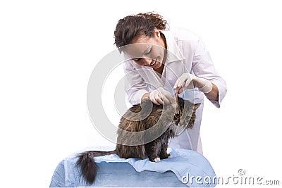 Vet have a medical examination a cat