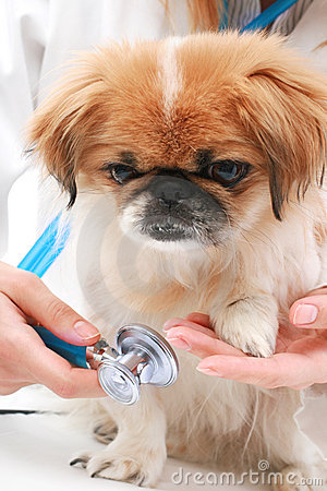 Vet and small dog.