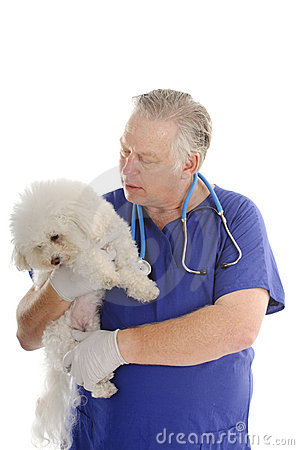 Free Vet With Bichon Frise Stock Photography - 18928692