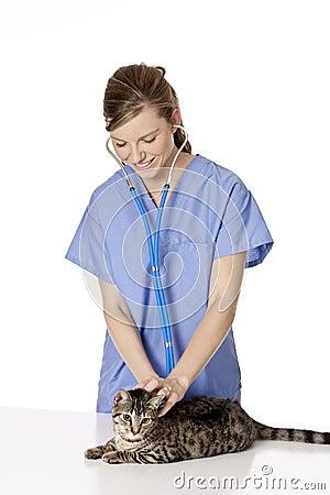 Beautiful Caucasian woman Veterinarian examining a kitten