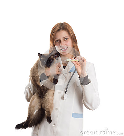 Veterinarian with a cat and a thermometer