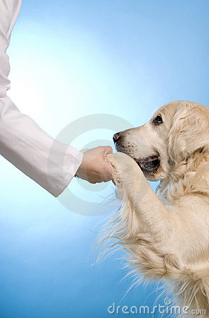 Free Veterinarian Doctor With Dog Royalty Free Stock Photo - 8963875