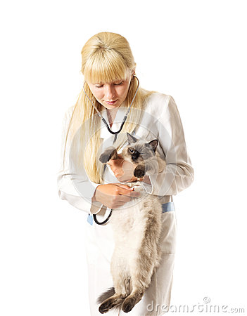Veterinarian examines a cat