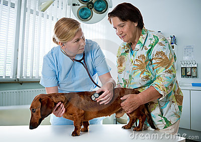 Veterinarian examining a dog